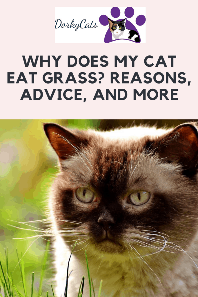 Pinterest pin for WHY DOES MY CAT EAT GRASS