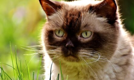 WHY DOES MY CAT EAT GRASS? REASONS, ADVICE, AND MORE