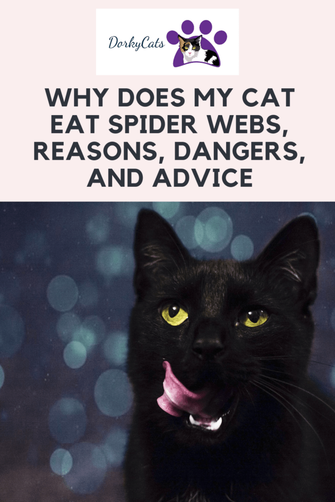 Why does my cat eat spider webs- Pinterest pin