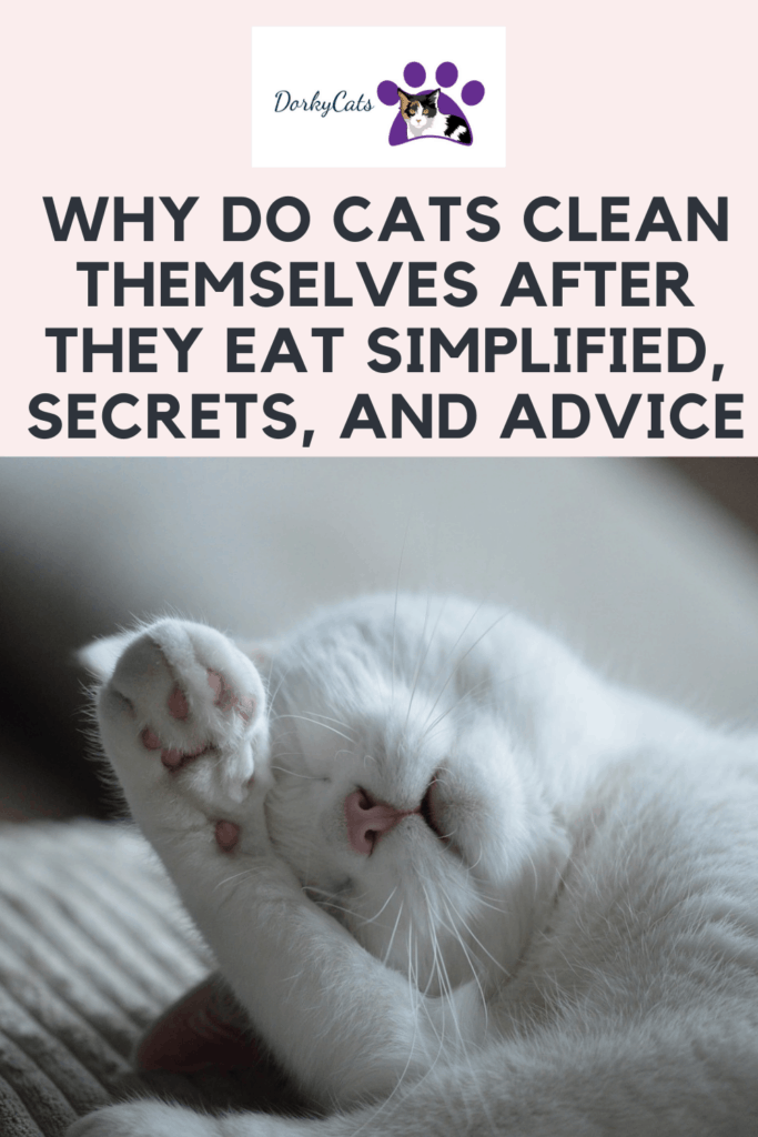 Why do cats clean themselves after they eat - Pinterest Pin