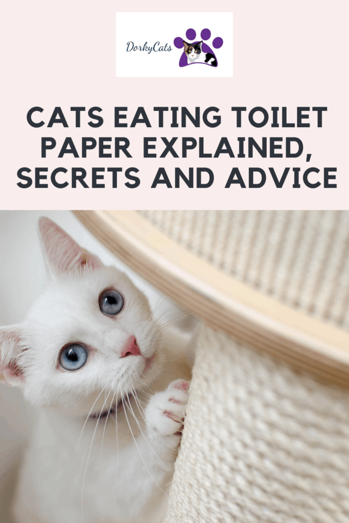 Cats eating toilet paper - Pinterest Pin
