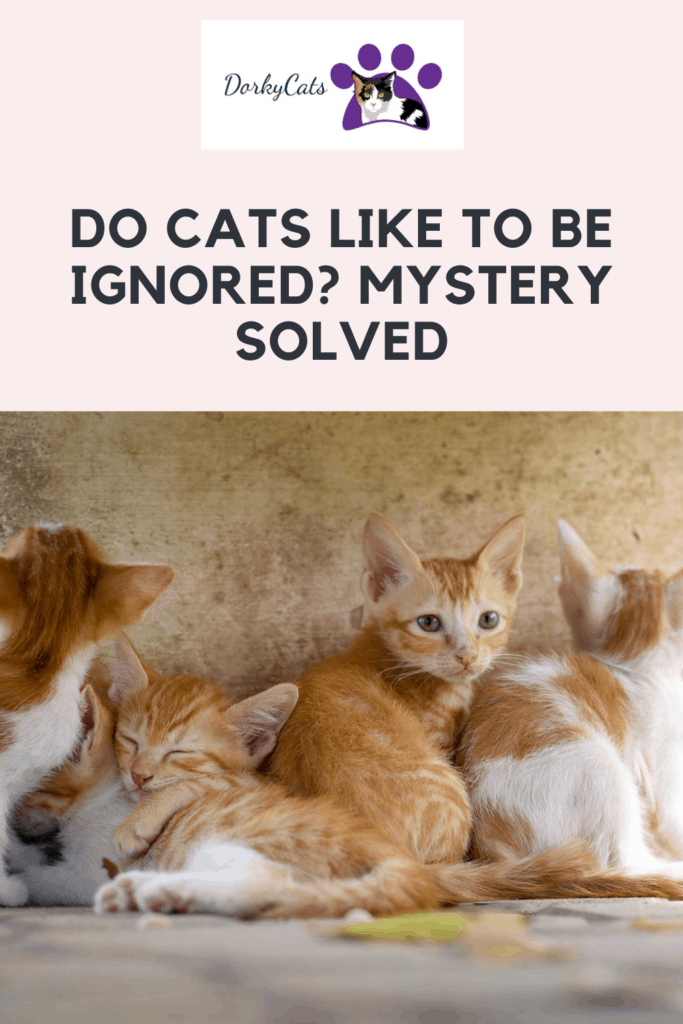Do cats like to be ignored - Pinterest Pin