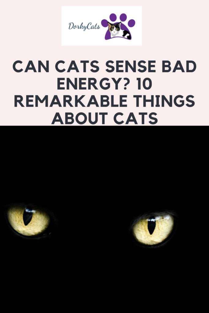 Can cats sense bad energy - Pinterest PIN
