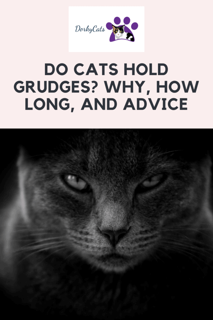 Do Cats Hold Grudges - Pinterest Pin