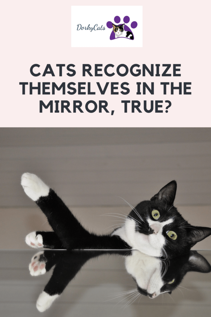 Cats recognize themselves in the mirror-Pinterest Pin