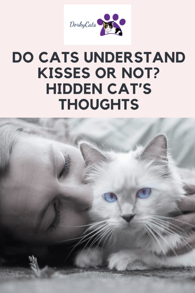 Do cats understand kisses? What happens after you kiss your cat?