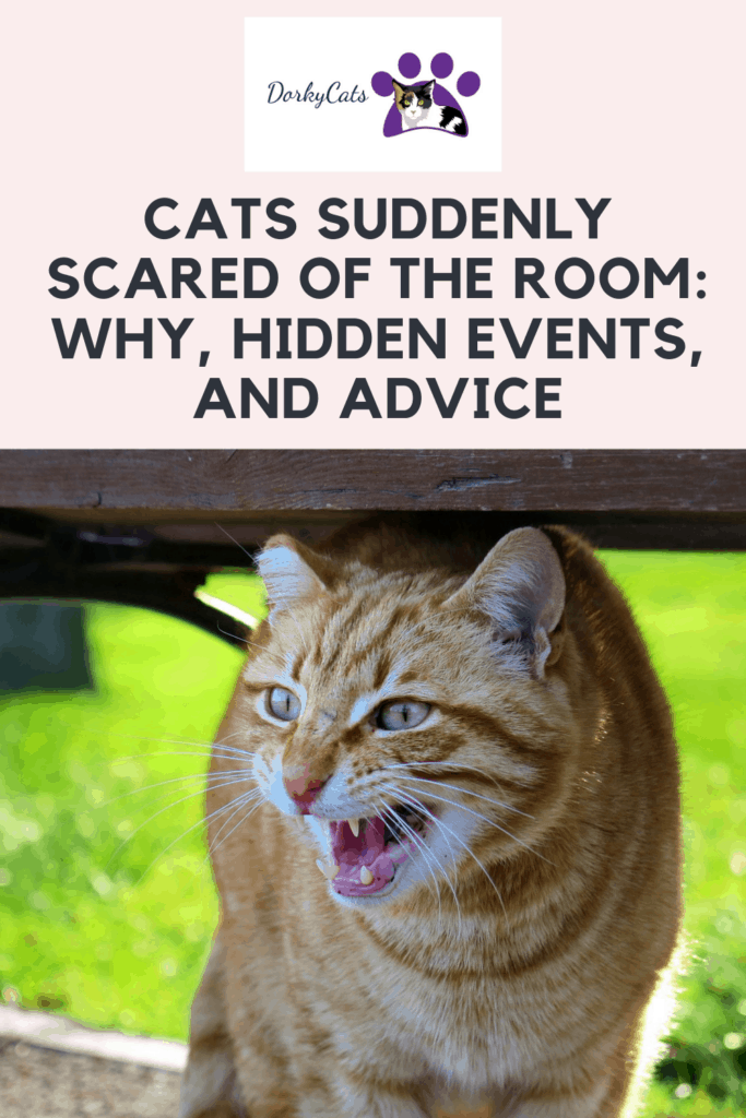 Cats suddenly scared of the room Pinterest Pin