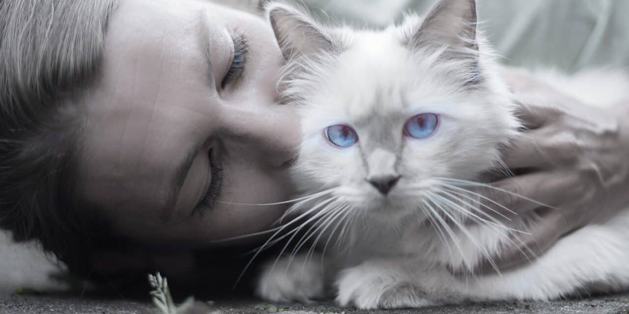 DO CATS UNDERSTAND KISSES OR NOT? HIDDEN CAT'S THOUGHTS