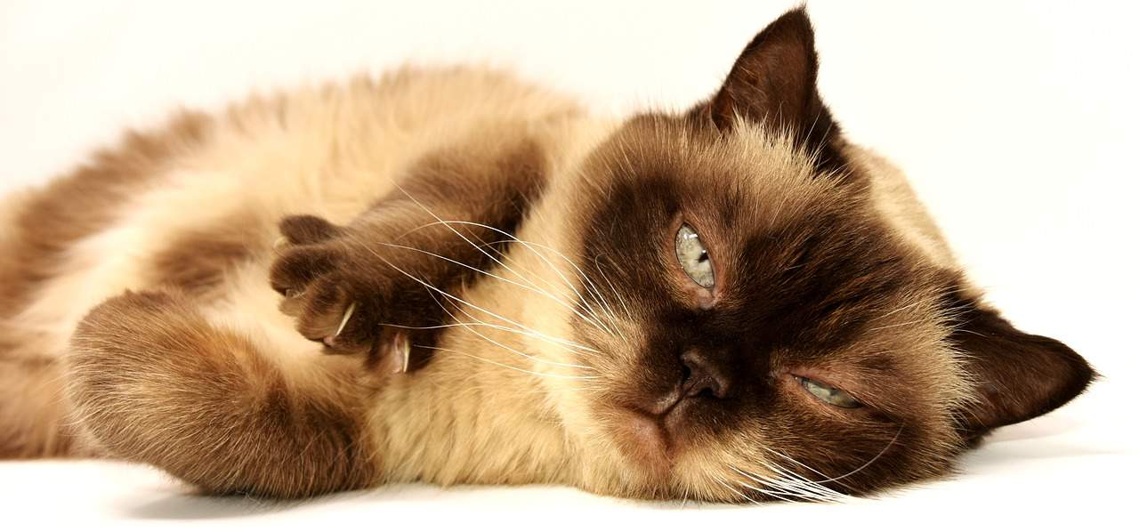WHY DO CATS PUT THEIR BUTTS IN YOUR FACE? HIDDEN REASONS AND ADVICE