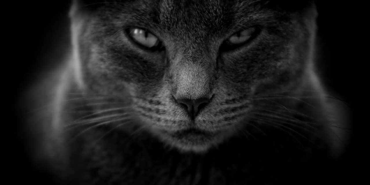 DO CATS HOLD GRUDGES? WHY, HOW LONG, AND ADVICE