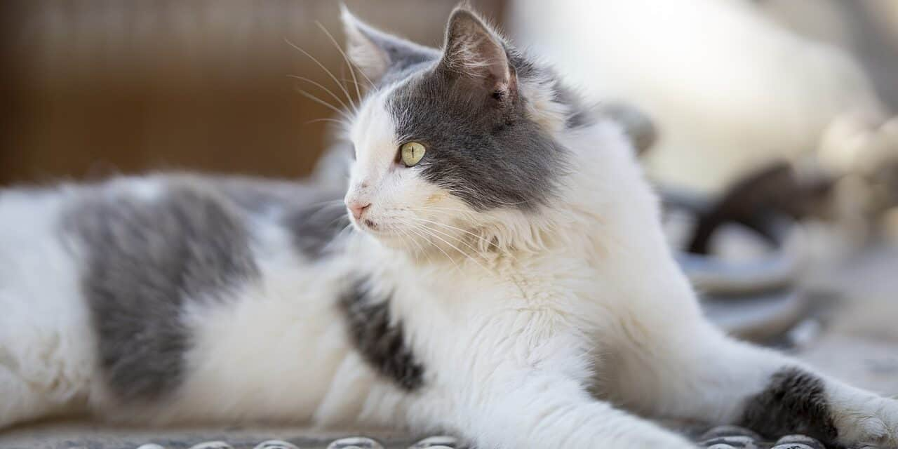 CATS USE THE LITTER BOX AFTER YOU CLEAN IT | SIMPLE REASON