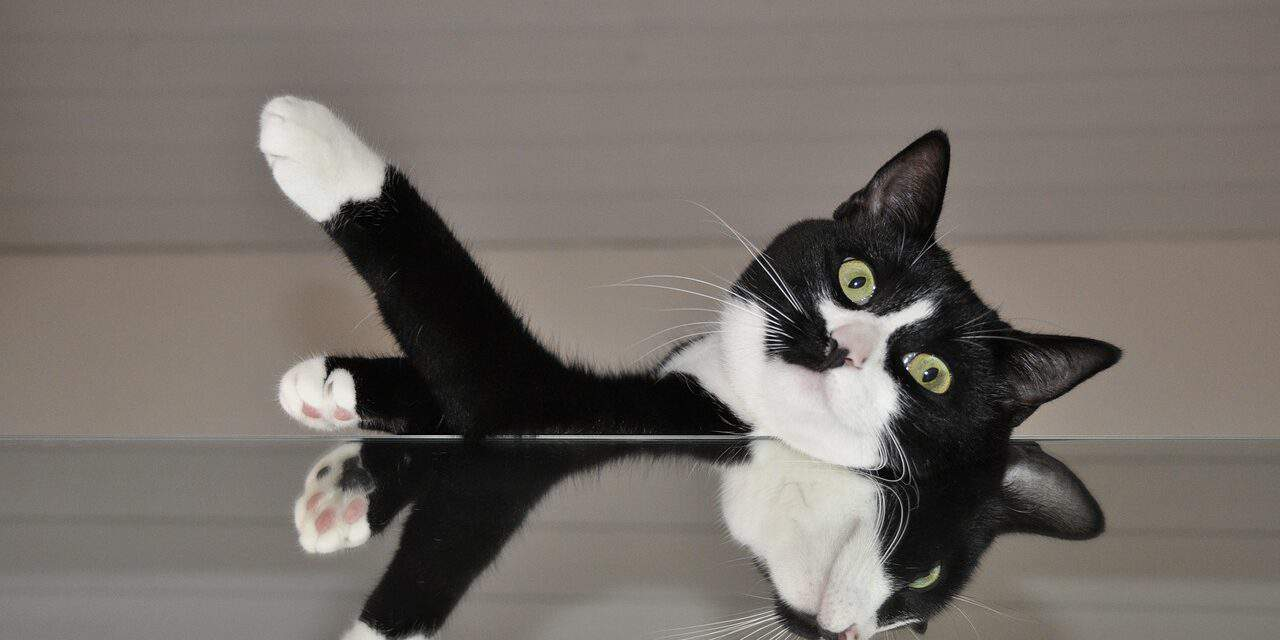 CATS RECOGNIZE THEMSELVES IN THE MIRROR, TRUE?