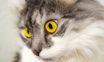WHY DO CATS LIKE PEOPLE WHO ARE ALLERGIC TO THEM? CONTROVERSIAL REASONS