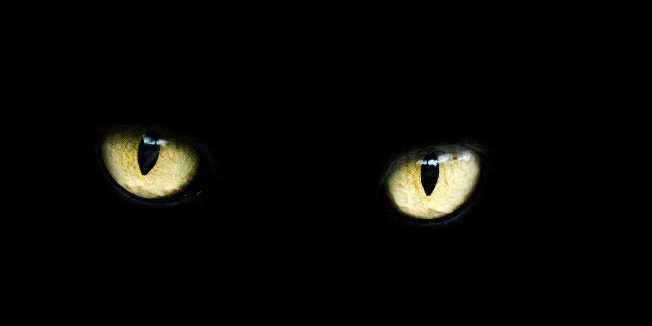 CAN CATS SENSE BAD ENERGY? 10 REMARKABLE THINGS ABOUT CATS