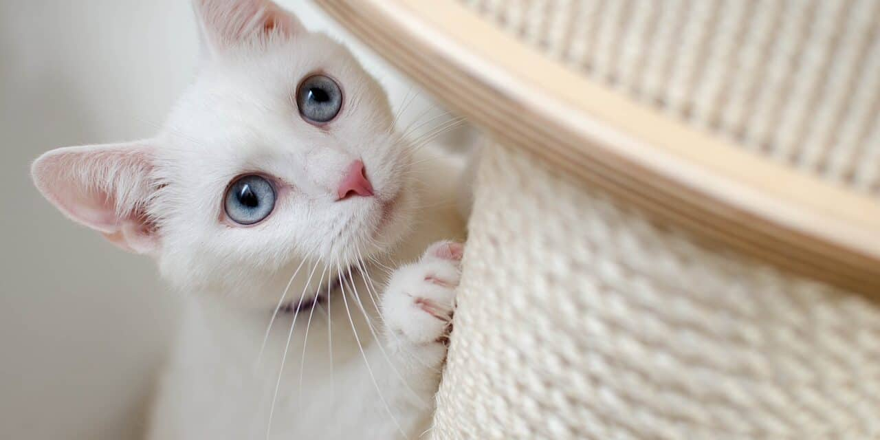CATS EATING TOILET PAPER EXPLAINED, SECRETS AND ADVICE