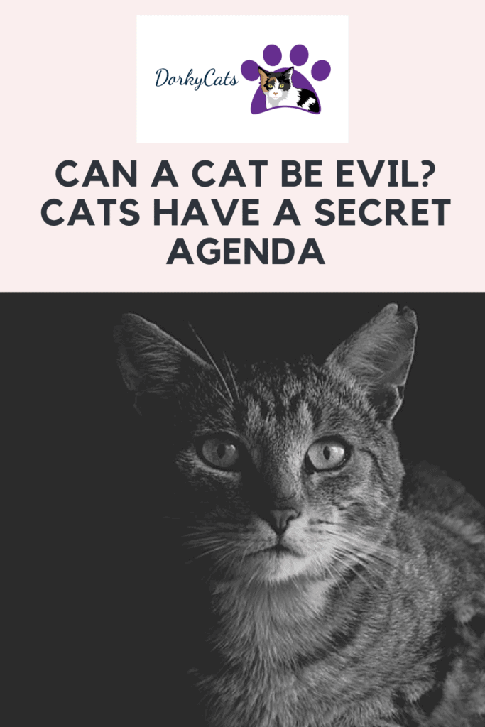 Can a cat be evil? - Pinterest Pin