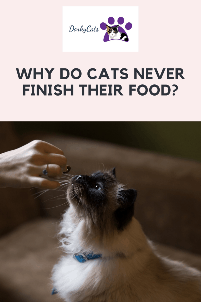 Why do cats never finish their food? - Pinterest Pin