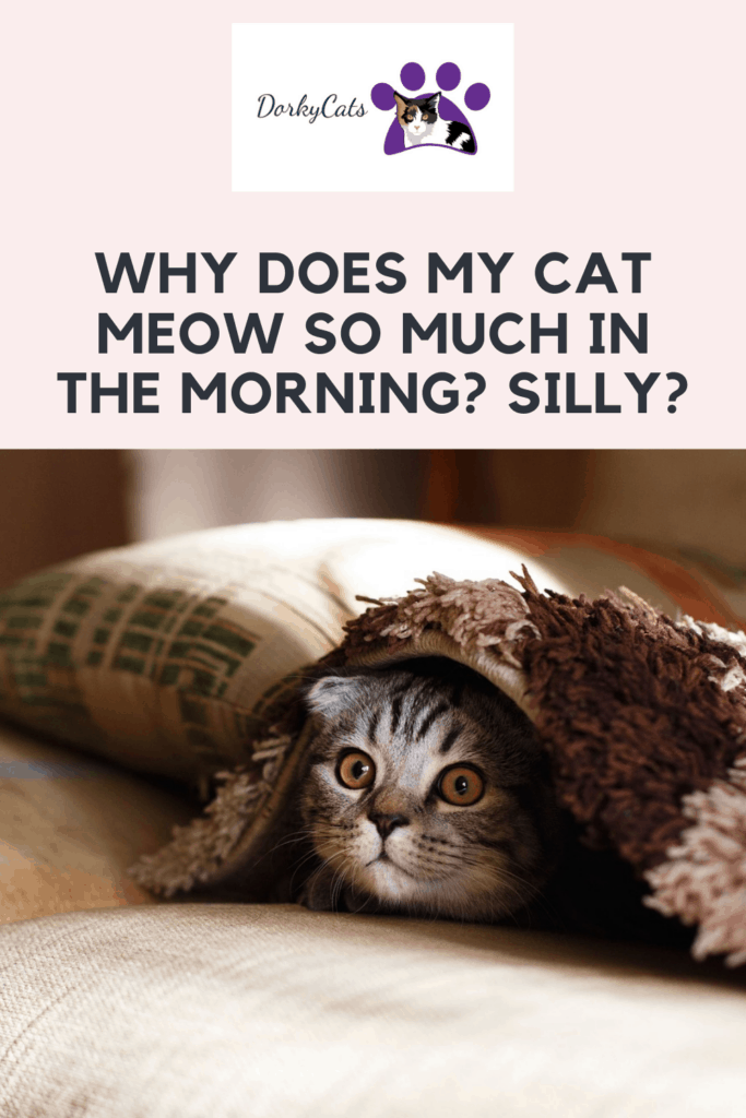 Why does my cat meow so much in the morning - Pinterest Pin