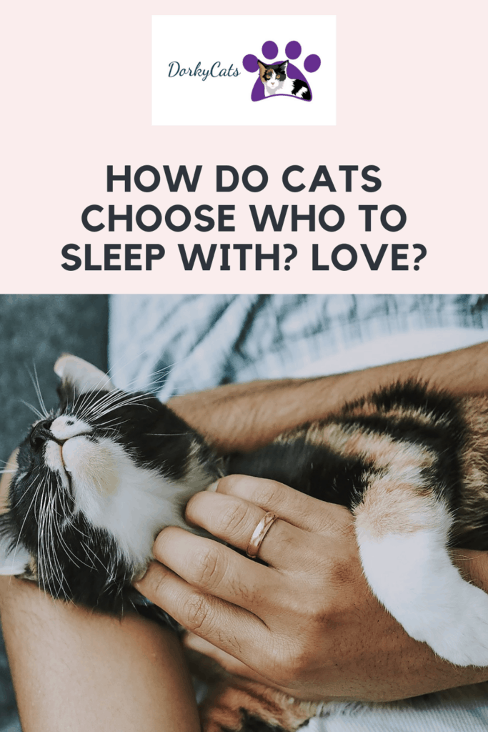 How do cats choose who to sleep with? - Pinterest Pin