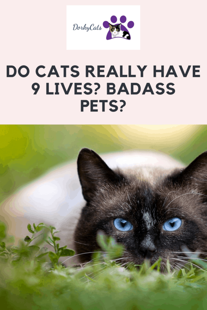 Do cats really have 9 lives? Pinterest Pin