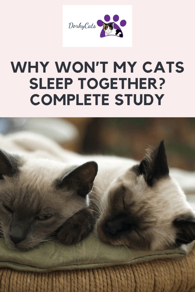 Why won't my cats sleep together? Pinterest Pin