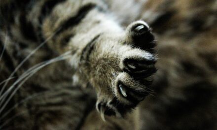 DO CATS BITE THEIR NAILS? WHY, ADVICE AND REMEDIES