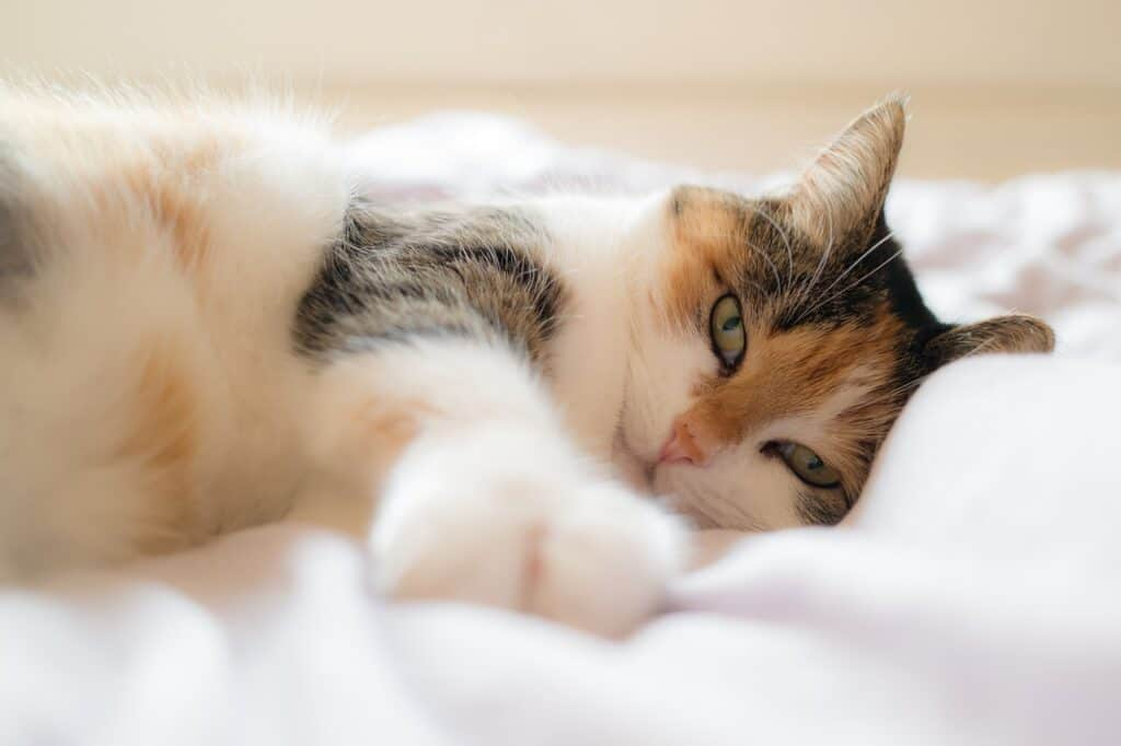 Cats positions meaning: side sleep position
