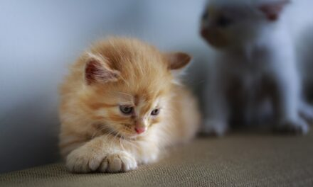 WHY DO CATS CROSS THEIR PAWS? BEAUTIFUL POSTURE
