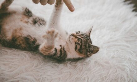 DO MALE CATS CALM DOWN AFTER BEING NEUTERED? TRUE?