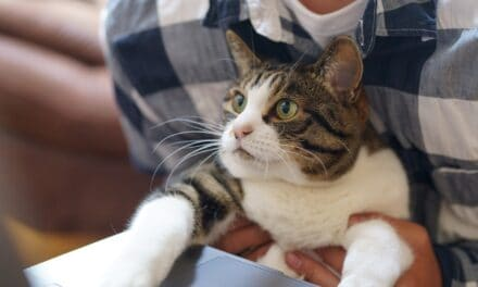 DO CATS ACT LIKE THEIR OWNERS? REVEALING?
