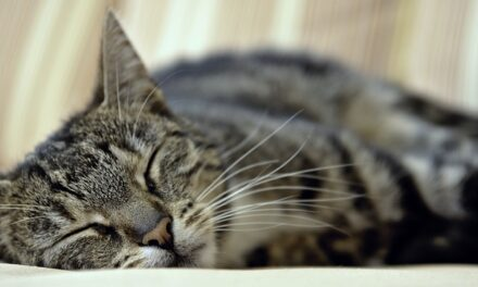 DO FEMALE CATS HAVE PERIODS AND BLEED? HOW TO ACT?