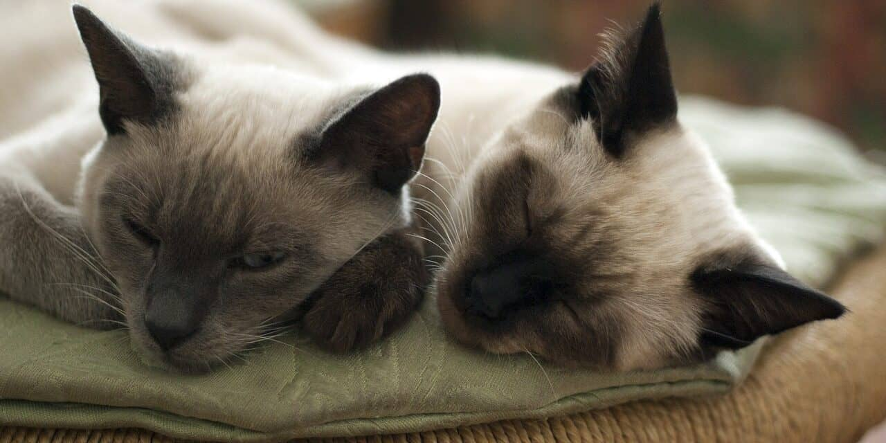WHY WON'T MY CATS SLEEP TOGETHER? COMPLETE STUDY