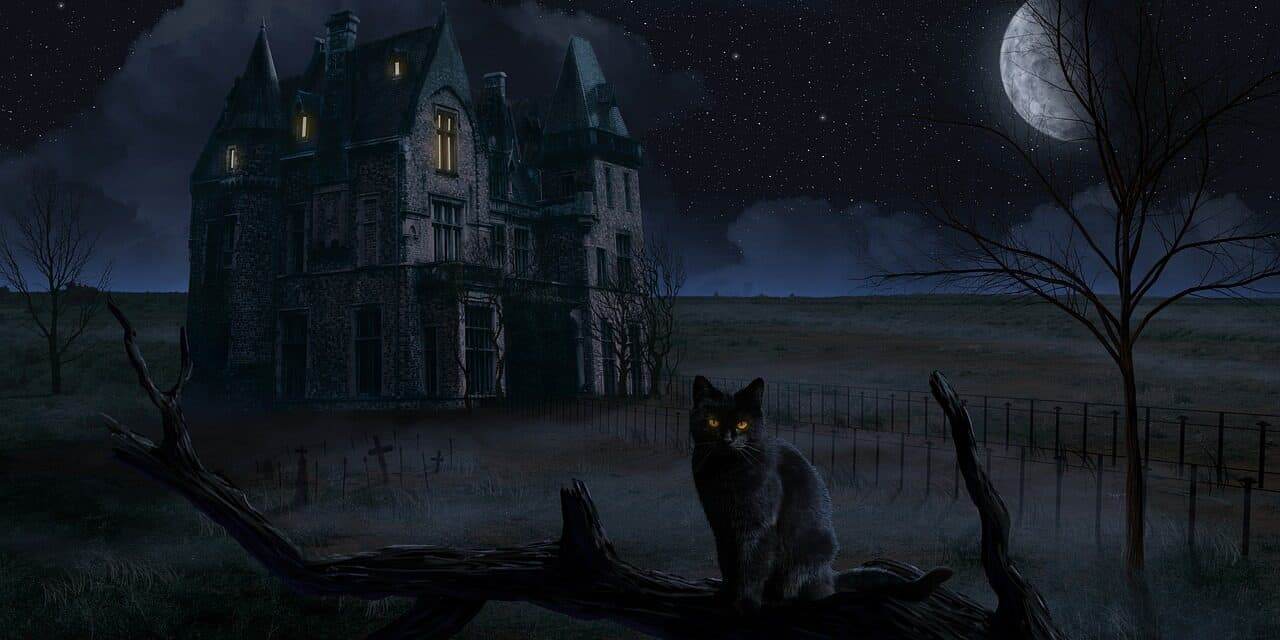 HOW TO KNOW IF YOUR CAT SEES A GHOST? CREEPY?