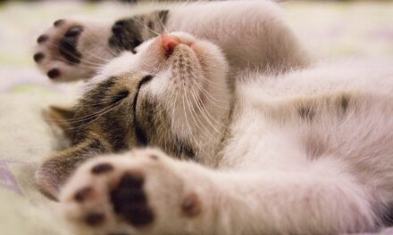 WHY DO CATS LIKE THE BASE OF THEIR TAIL SCRATCHED?