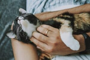 HOW DO CATS CHOOSE WHO TO SLEEP WITH? LOVE?