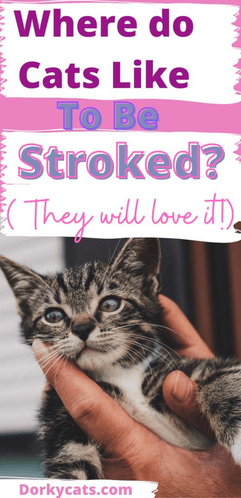 Where do cats like to be stroked the most?
