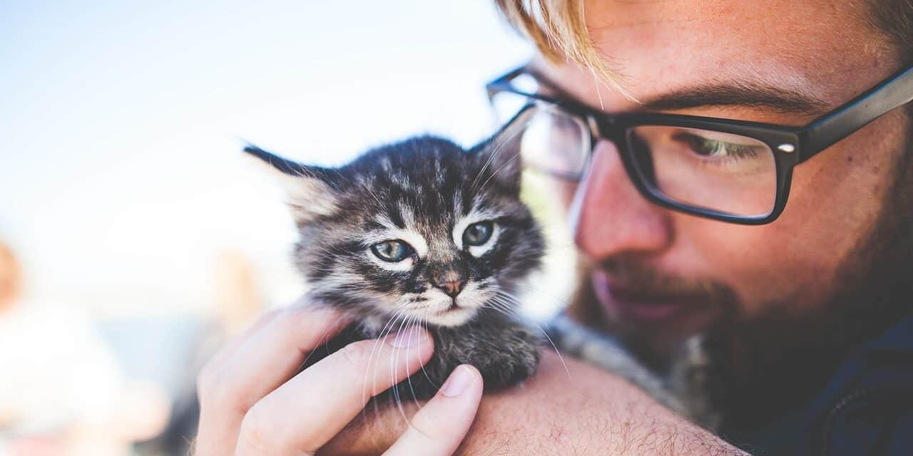 HOW TO SAY NO TO YOUR CAT? IS IT EVEN POSSIBLE?