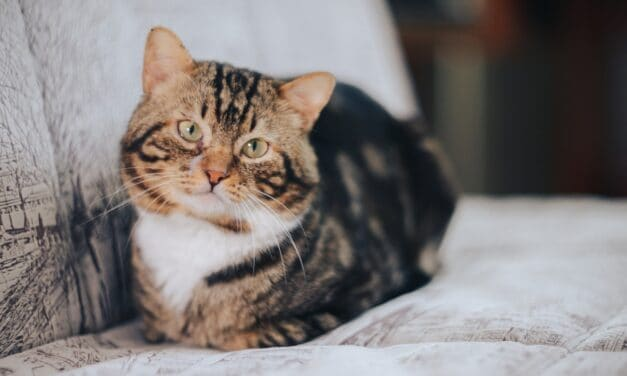 MY CAT LISTENS TO ME AND YOURS? 4+ REVEALING TIPS