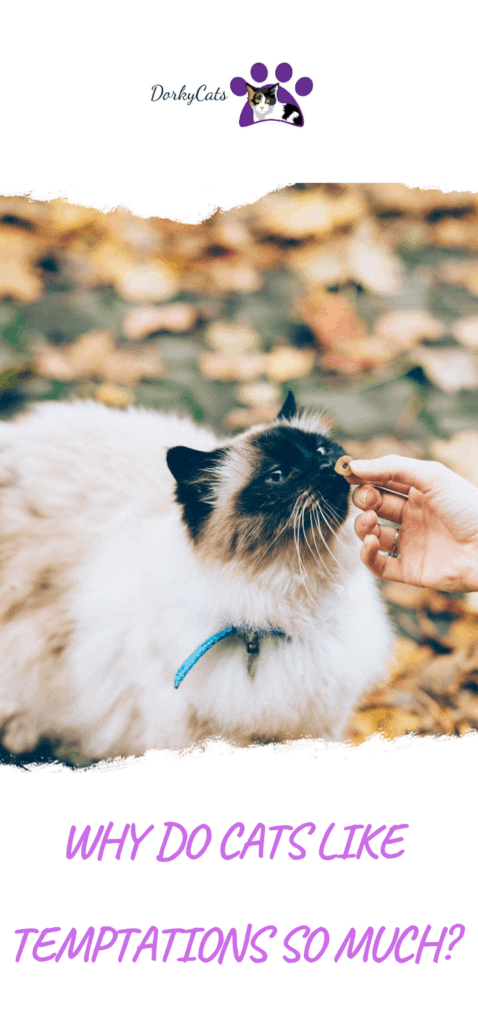 Why do cats like temptations so much?