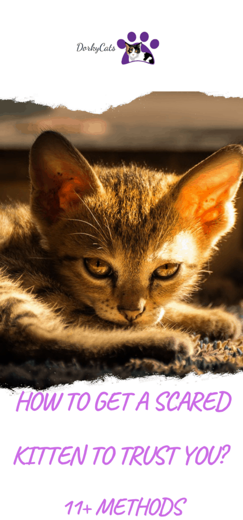 How to get a scared kitten to trust you?