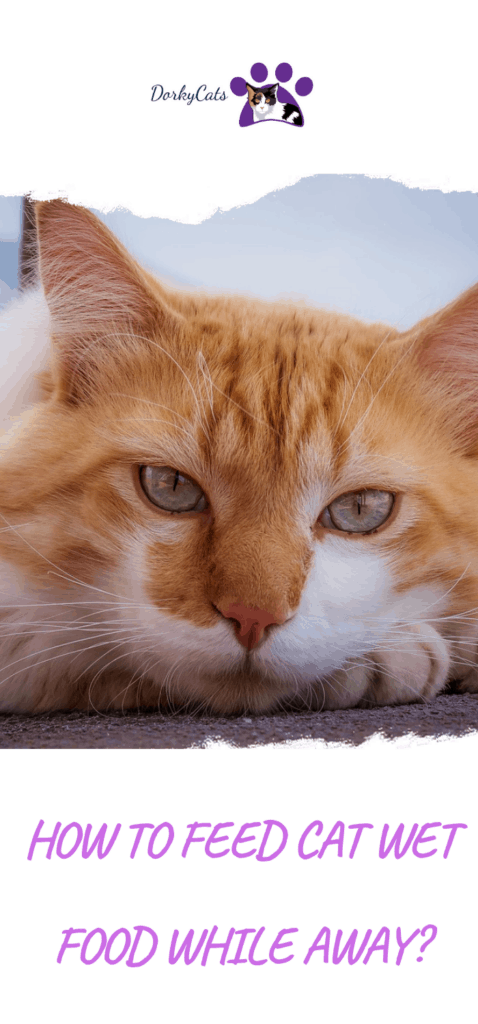 How to feed cat wet food while away?