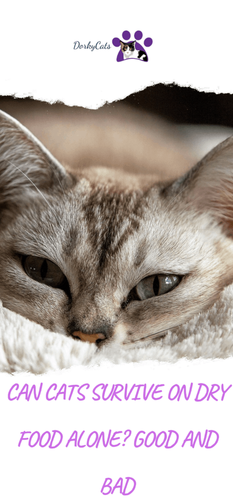 Can cats survive on dry food alone?