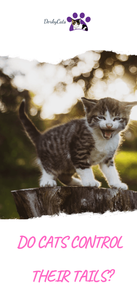 Do cats control their tails?
