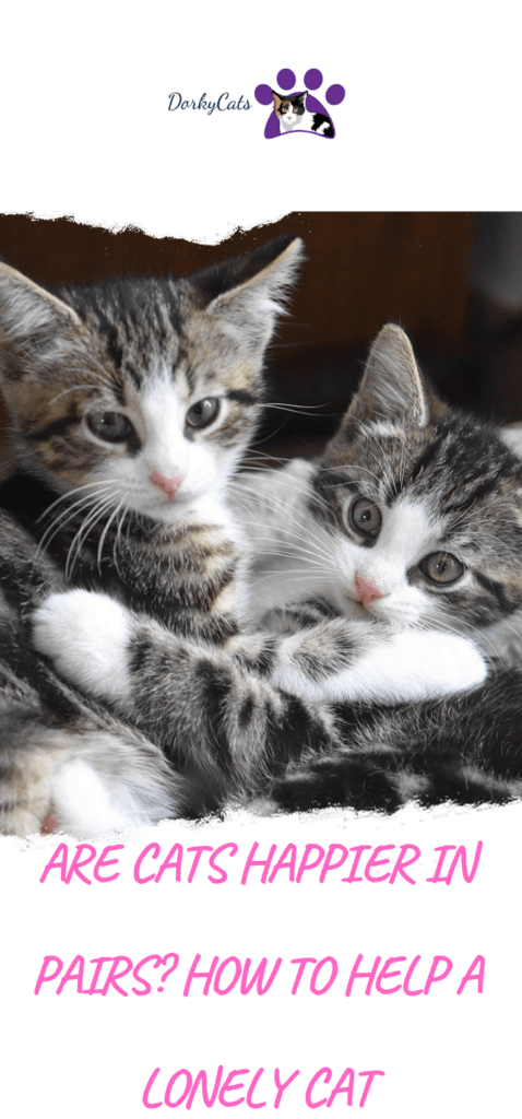 Are cats happier in pairs?