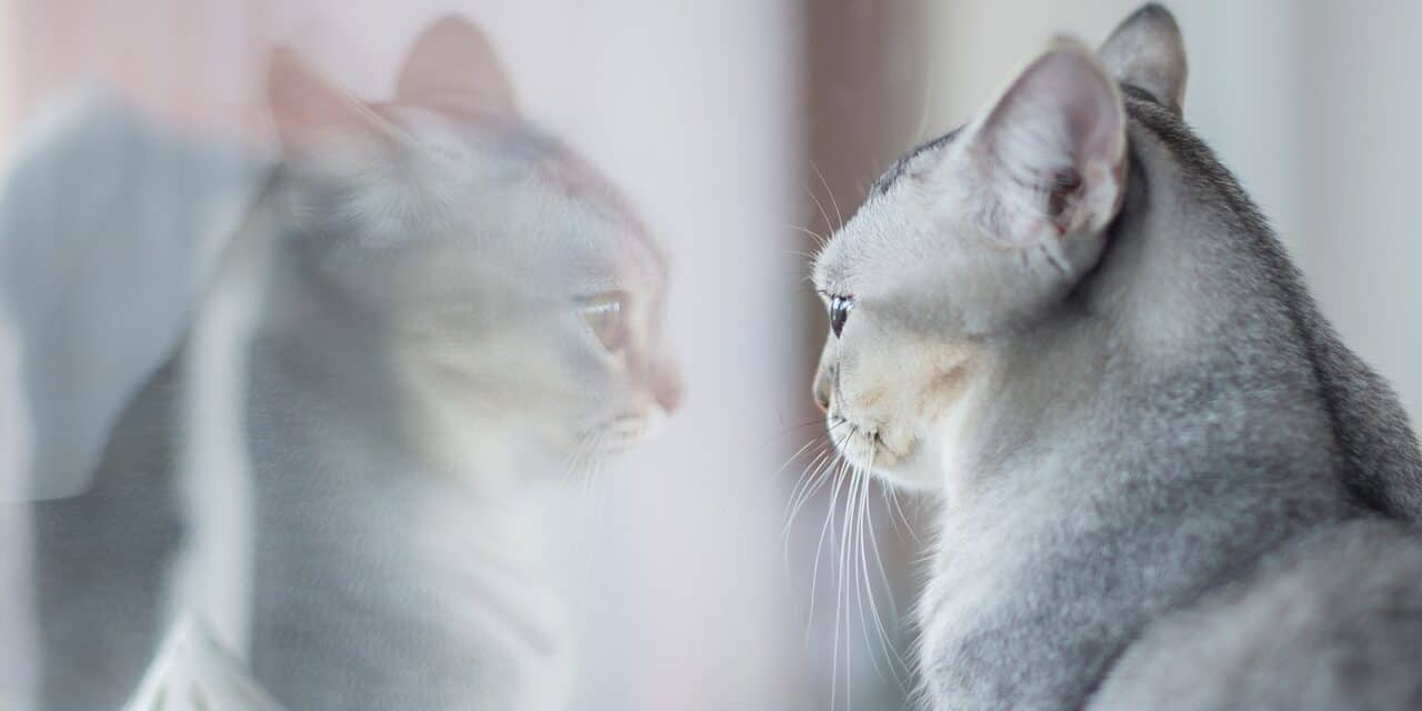 DO CATS POOP LESS ON WET FOOD?
