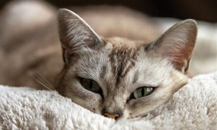 CAN CATS SURVIVE ON DRY FOOD ALONE? GOOD AND BAD