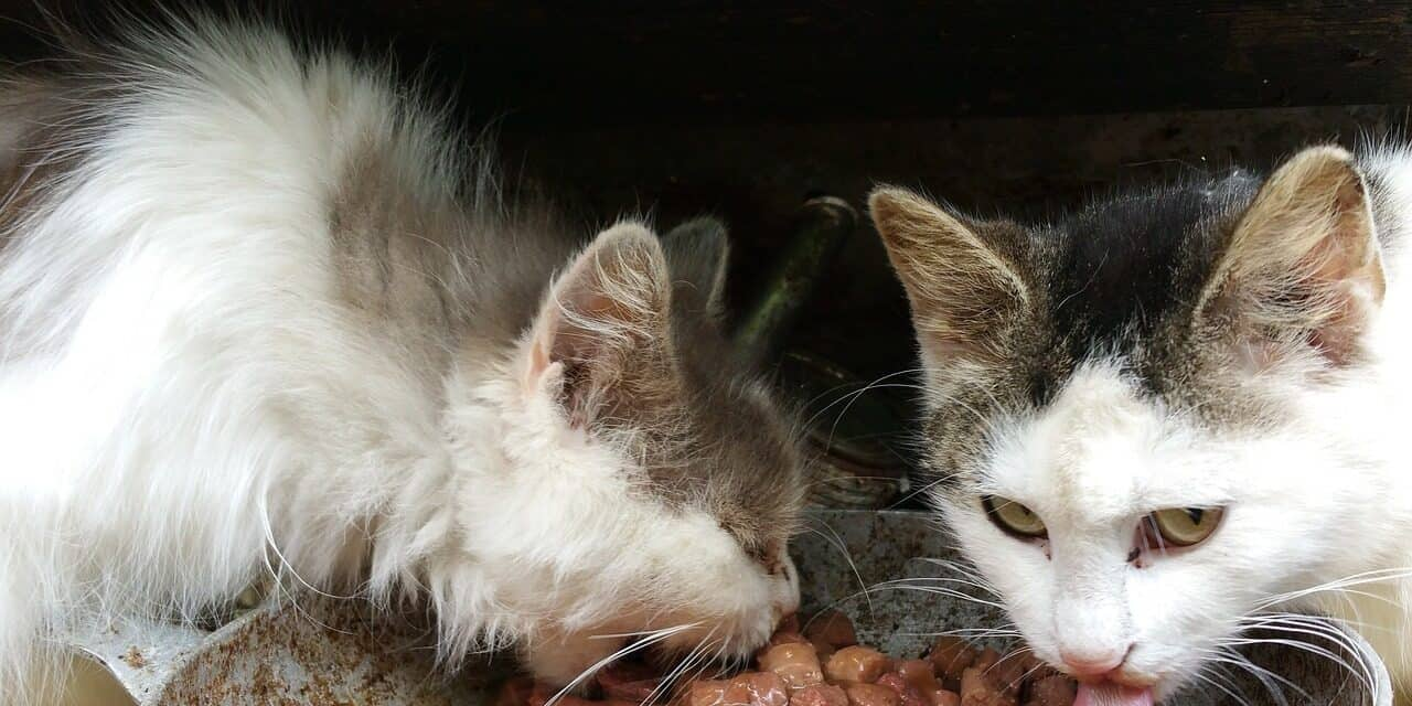 DO CATS SHARE FOOD BOWLS? HOW TO DEAL WITH IT