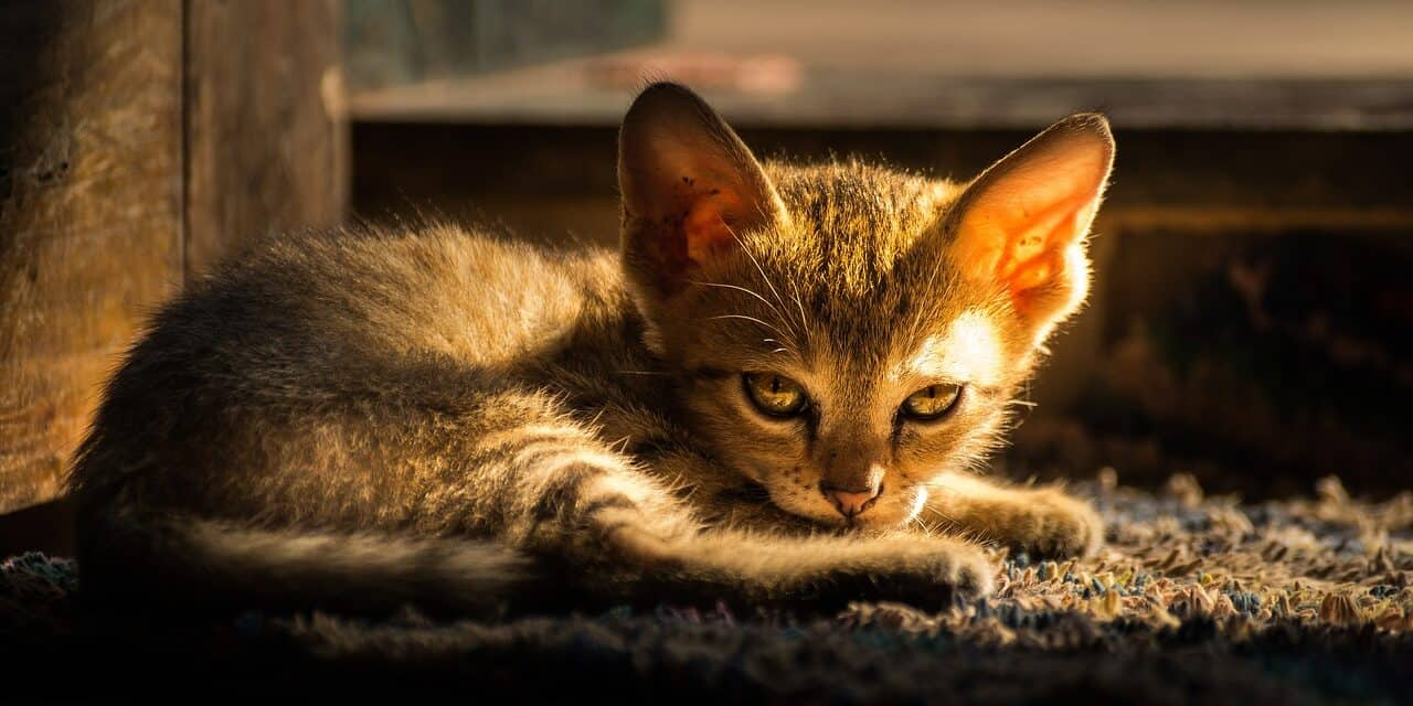 HOW TO GET A SCARED KITTEN TO TRUST YOU? 10  METHODS