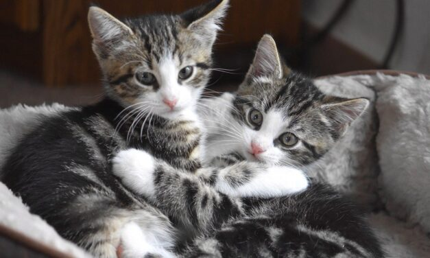 ARE CATS HAPPIER IN PAIRS? HOW TO HELP A LONELY CAT