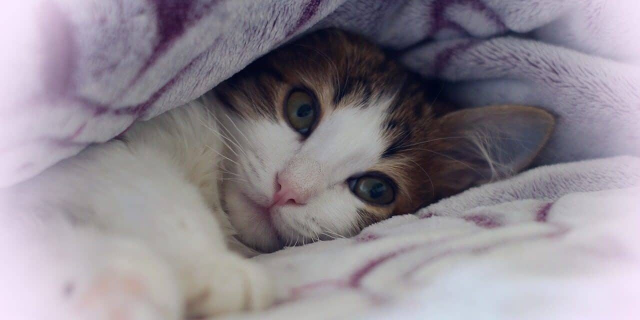WHAT DOES IT MEAN WHEN YOUR CAT SLEEPS ON YOU? 5 REASONS